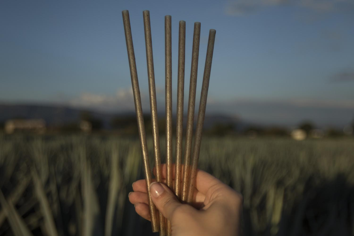 Jose Cuervo to Release Biodegradable Straws Made From Agave Waste photo