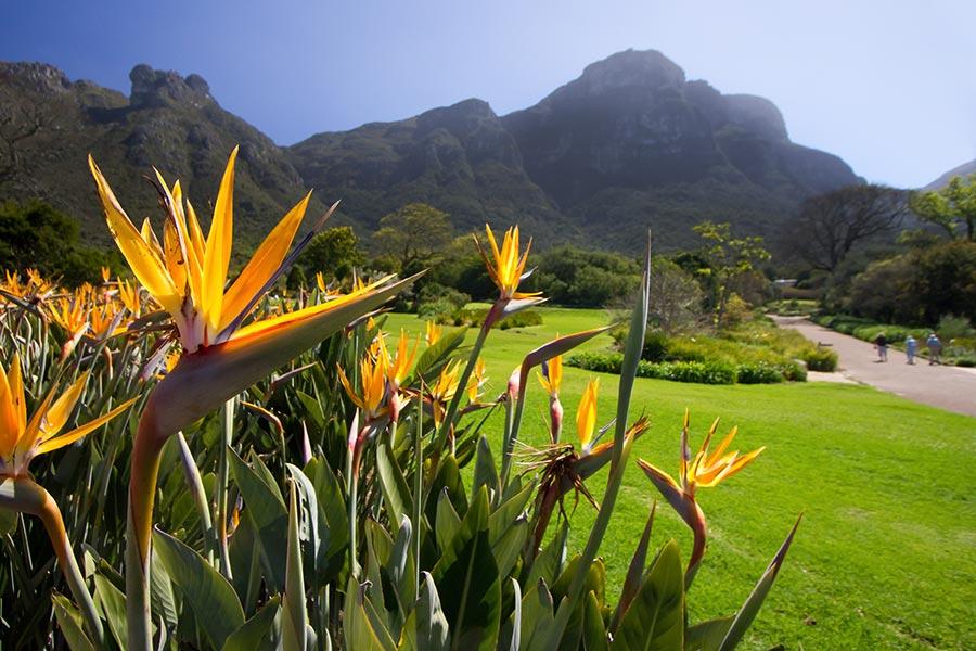 Living Kaleidoscope: Kirstenbosch Gardens, Cape Town's Very Own Garden Of Eden. photo