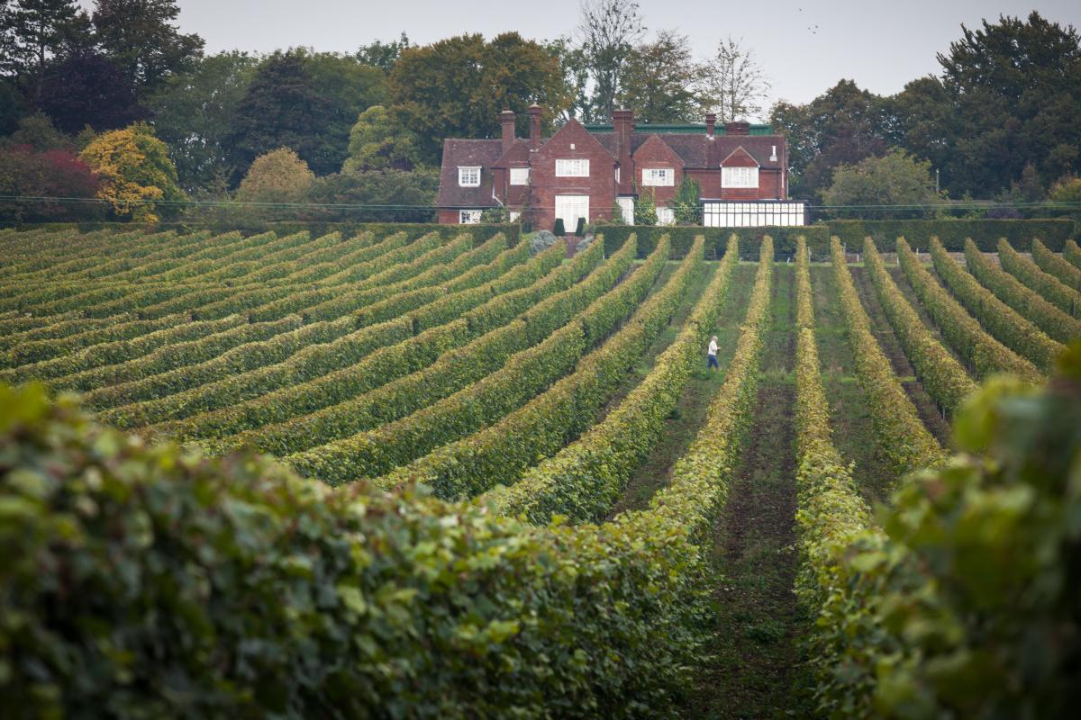 You'd Think You're In France With Hampshire Vineyards' Sprawling Grounds And Wine photo