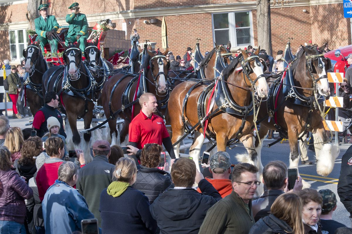 Budweiser Clydesdales Draw Crowd In West Annapolis During Pre-military Bowl Festivities photo