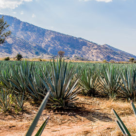 Tequila And Mezcal Brands To Watch In 2020 photo