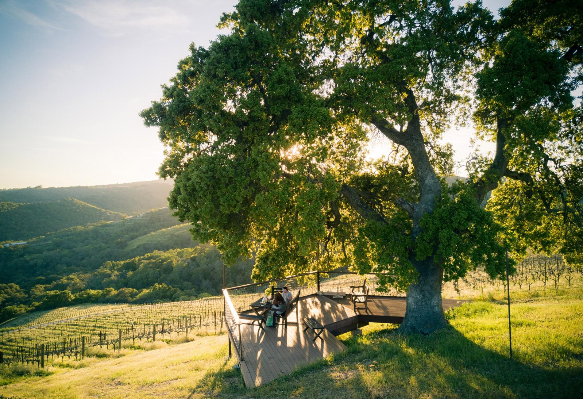 Why The Central Coast Is California?s Next Great Wine Destination photo