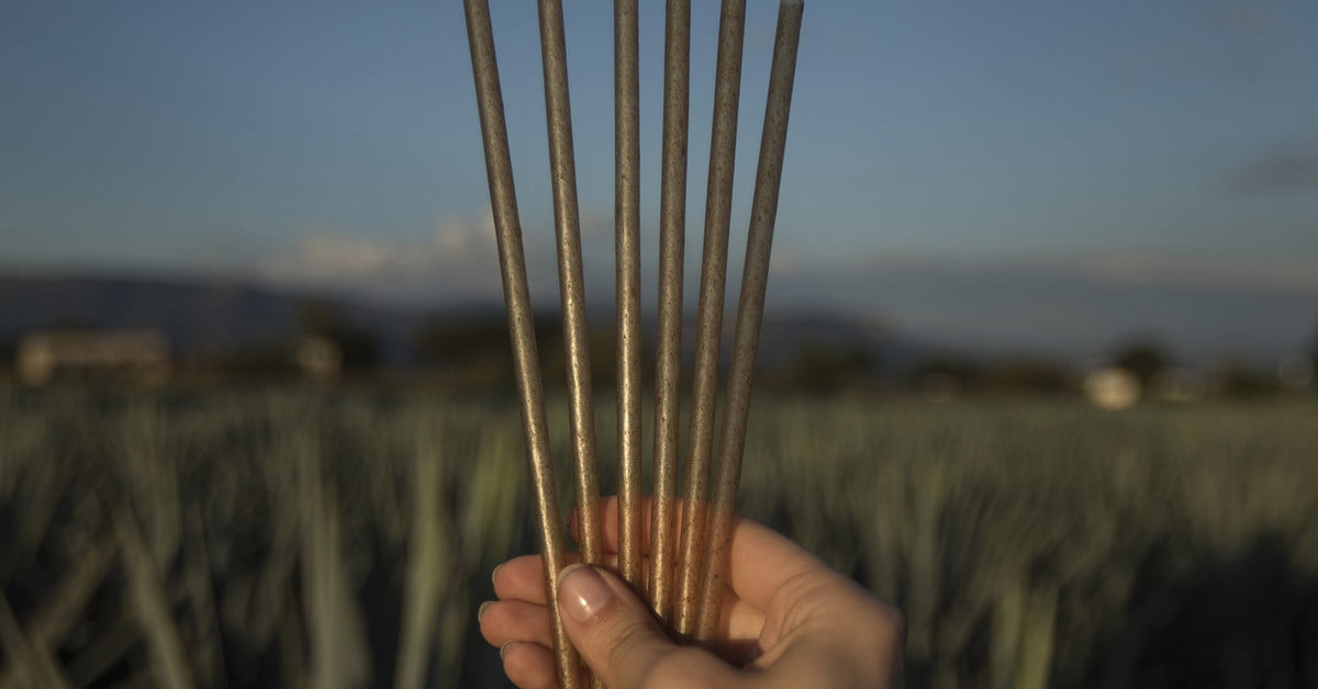 Jose Cuervo Reveals New Agave-based Biodegradable Straws photo