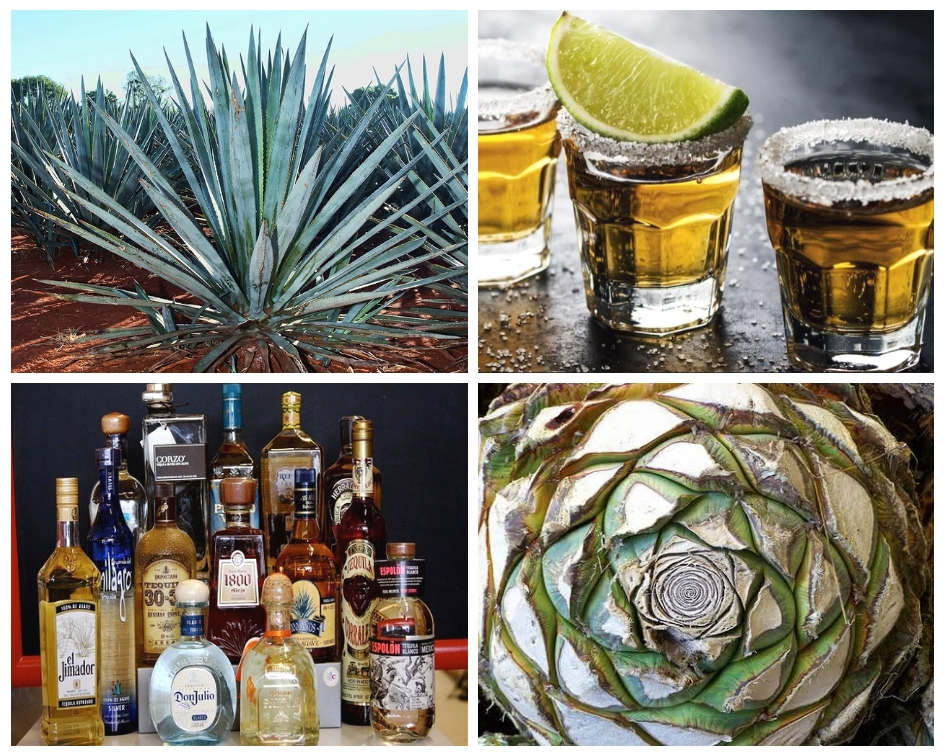 All You Ever Wanted To Know About Tequila photo