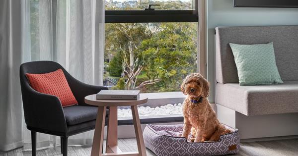 The Best Dog-friendly Hotels In Australia photo