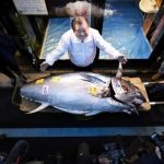 Japanese Sushi King Spends Millions On Tuna At Tokyo Auction photo