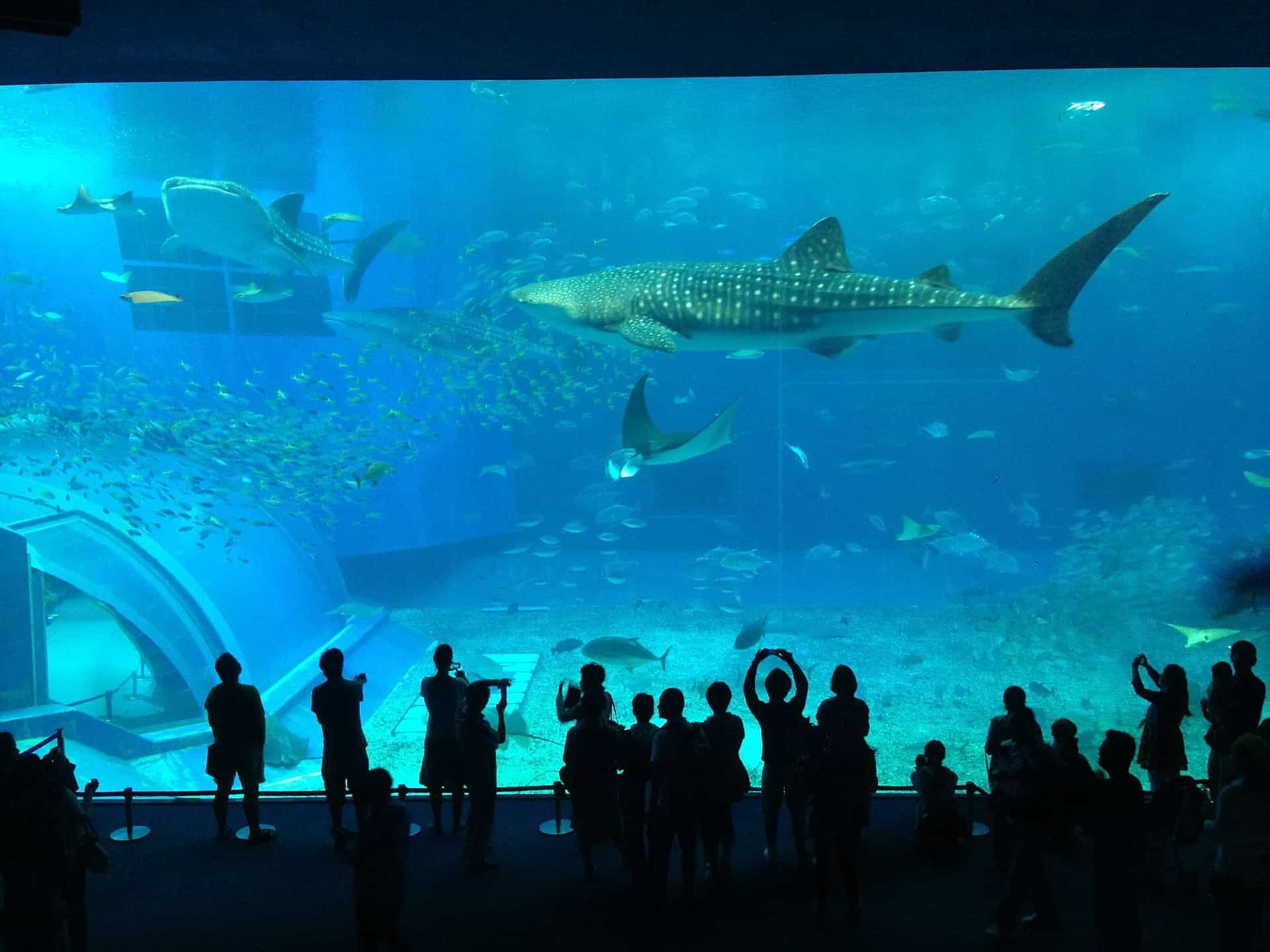Enjoy Valentine's Day With A Picnic At The Two Oceans Aquarium photo