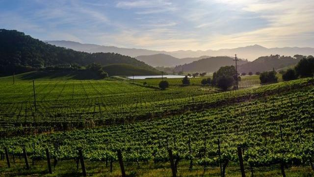 Stags Leap District Winegrowers Offer Vineyard To Vintner Weekend photo