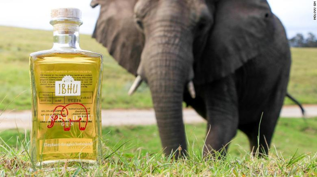 This Gin Is Made With Elephant Dung — And There's A Good Reason photo