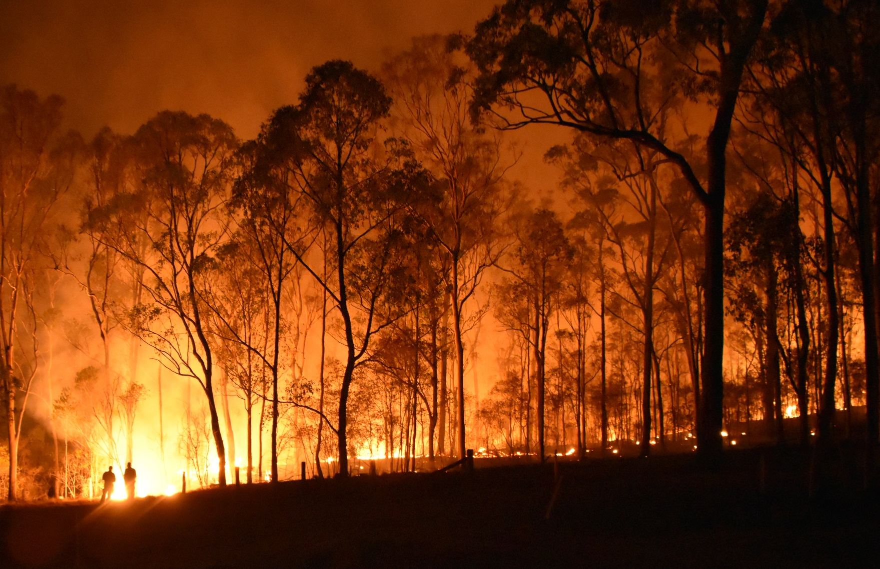 With A Bushfire Just 3km Away, Aussie Distiller Prays The Wind Doesn?t Change Direction photo