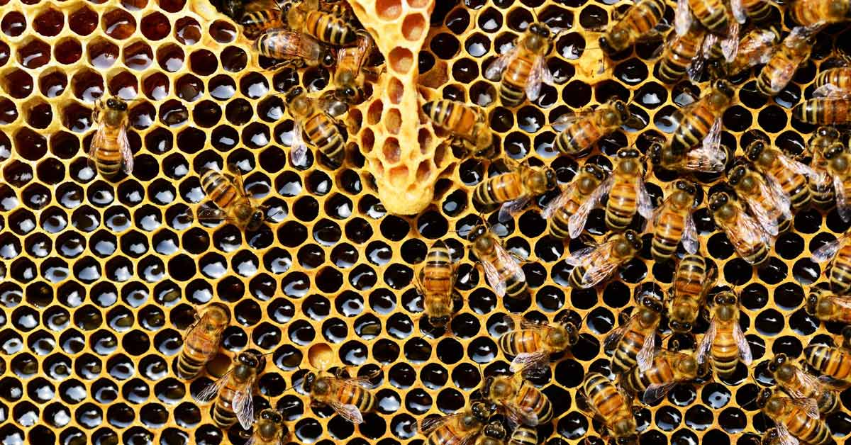 How The Almond Milk Trend Wipes Out Billions Of Bees photo
