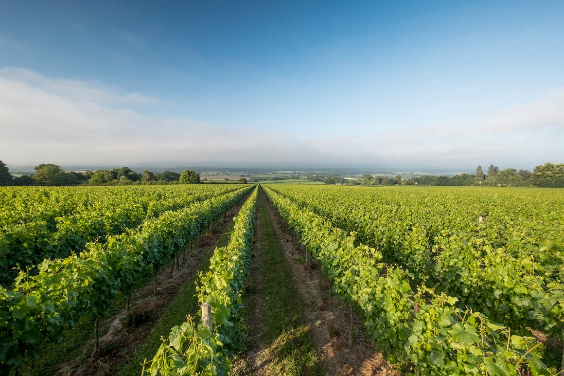 English Sparkling Wines Strengthened By Climate Change photo