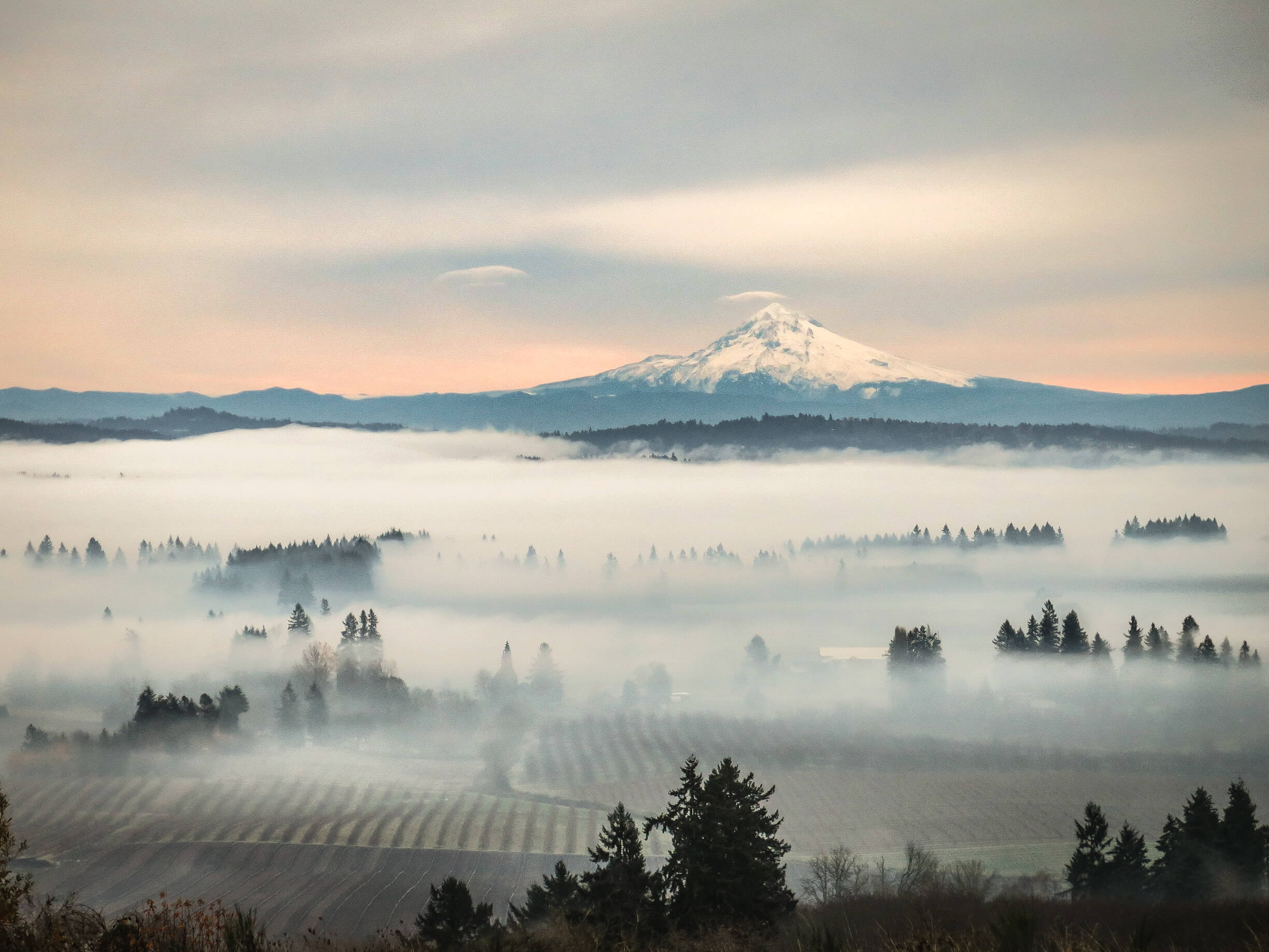 The Return Of Refined Oregon Pinot Noir photo