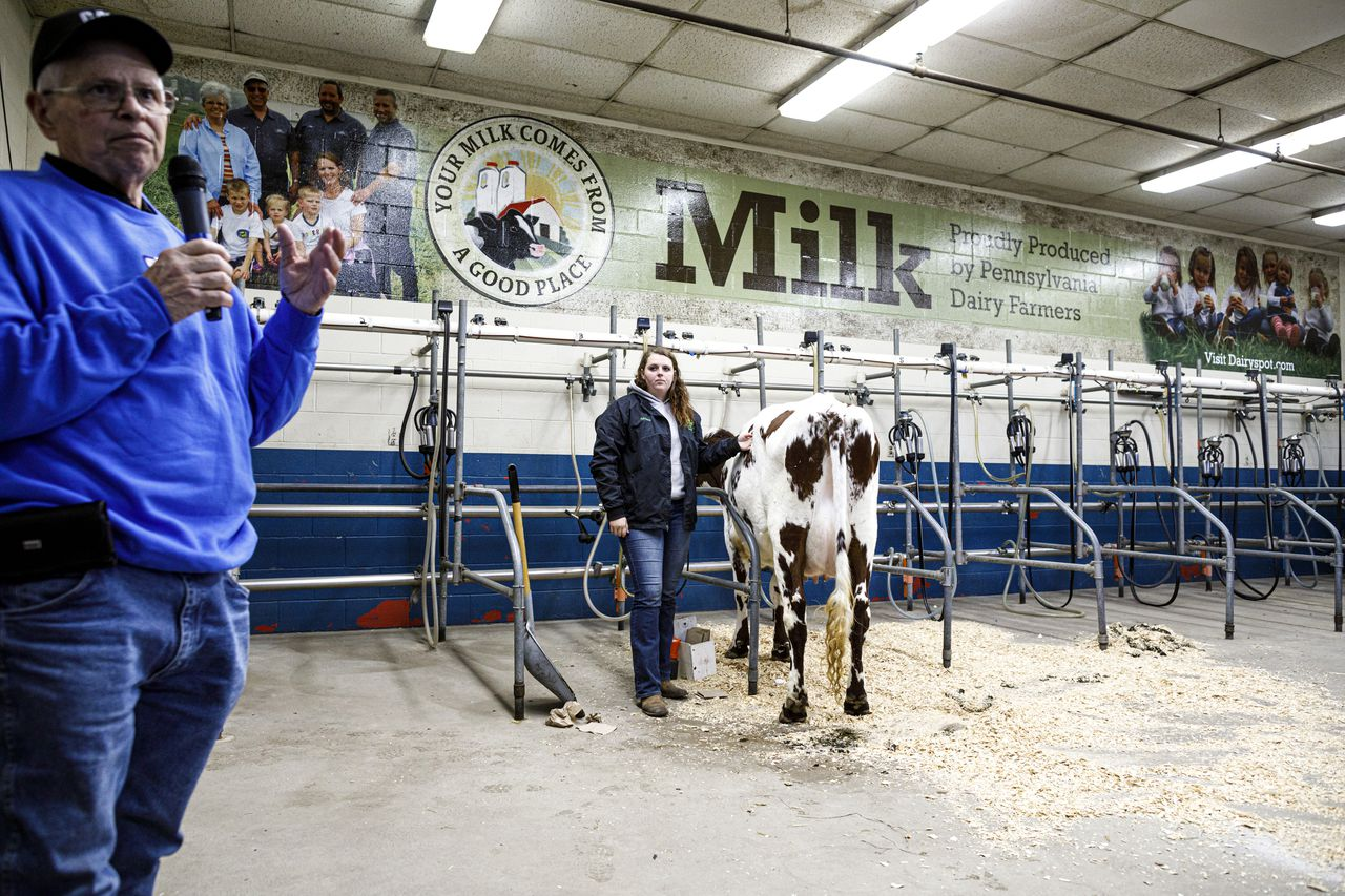 'there?s No Magic Bullet?: Pa. Dairy Farmers Face Uncertainty As Milk Producers Declare Bankruptcy photo