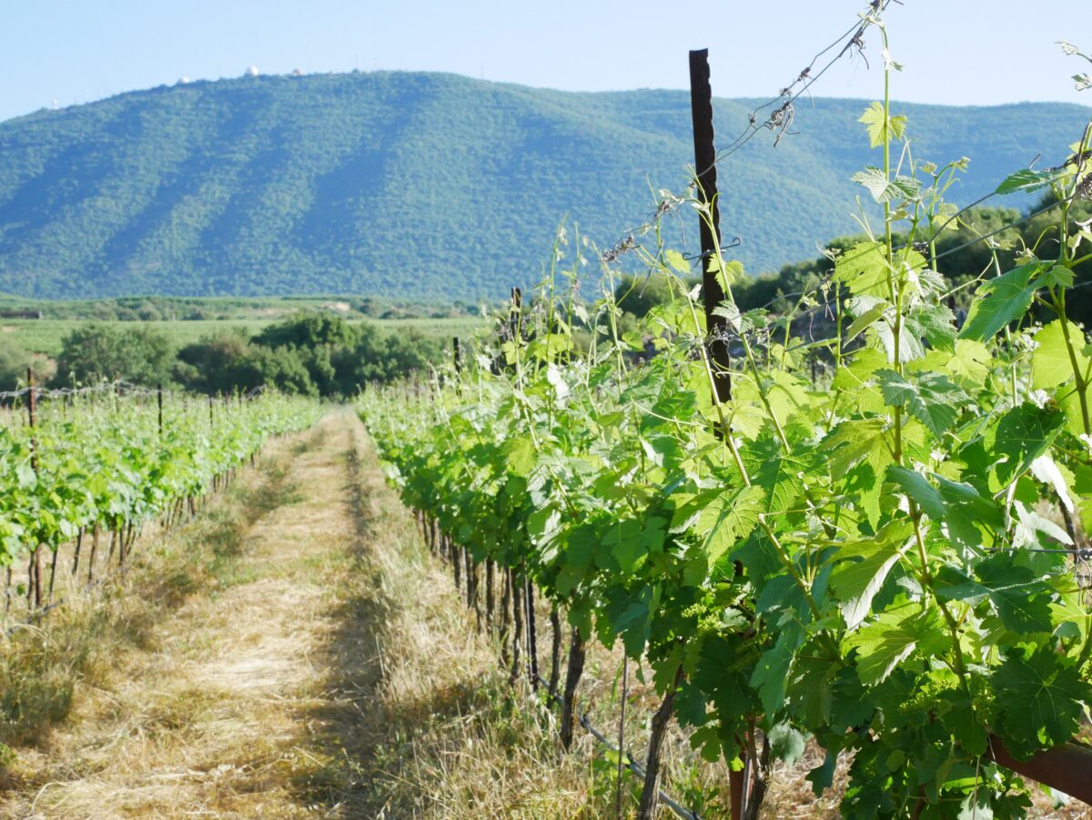 Israeli Wines: Where The Mediterranean Meets The Middle East photo