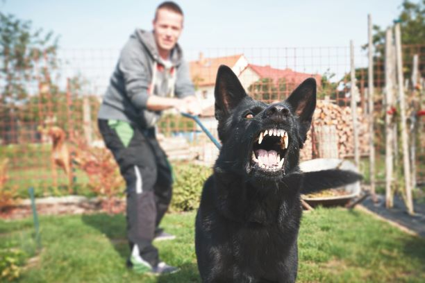 Dog Owner? Here's Some Key Advice On How To Lessen Liability For Dog Attacks photo