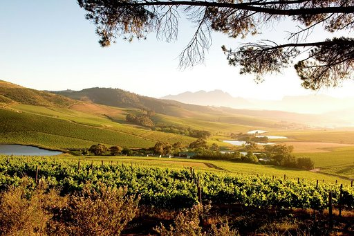 Experience Jordan Wine Estate From Home During The #21daysoflockdown photo