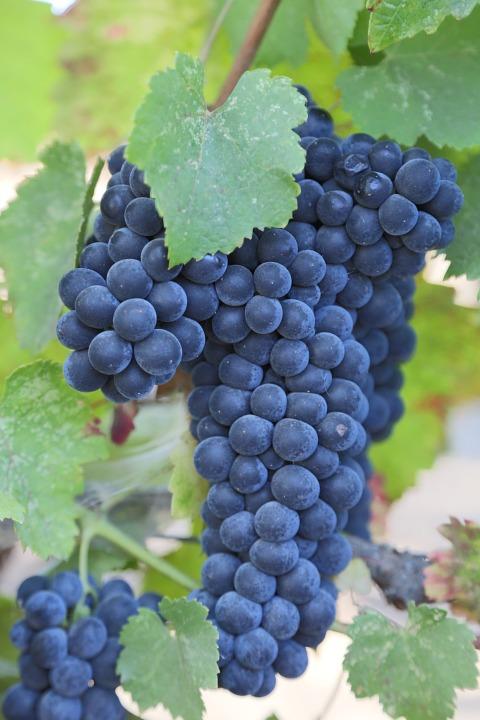 napa valley 921467 960 720 Know Your Wine: Cabernet Sauvignon