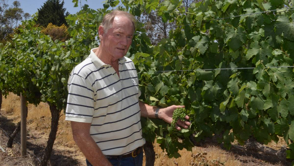Drought To Lead To Smaller, Good Quality, Wine Crop For Cool Climate Region photo