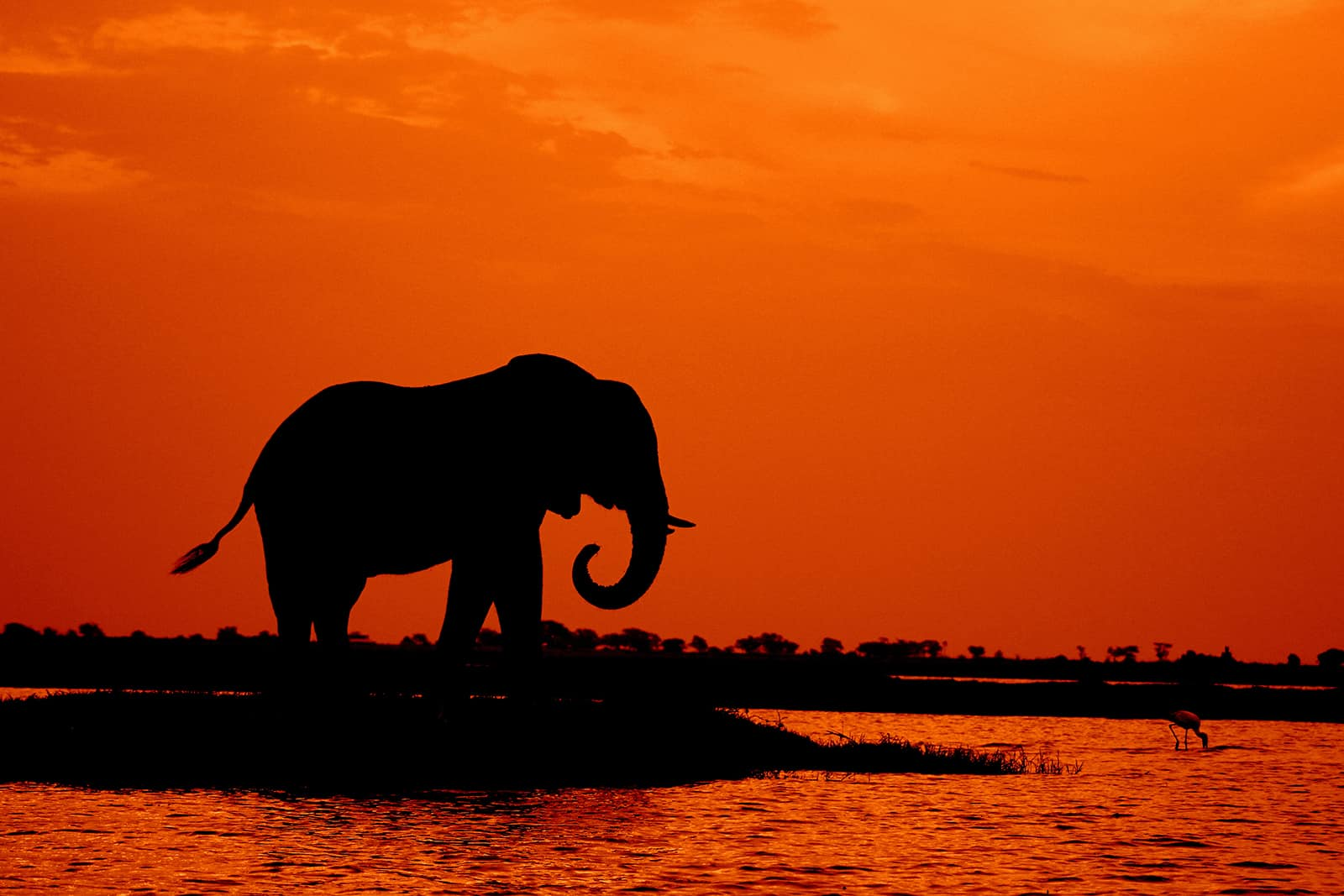 Botswana Holds Onto Title As Africa's Best Safari Country photo