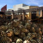 5 Ways To Hang With Jose Cuervo In Tequila, Mexico photo