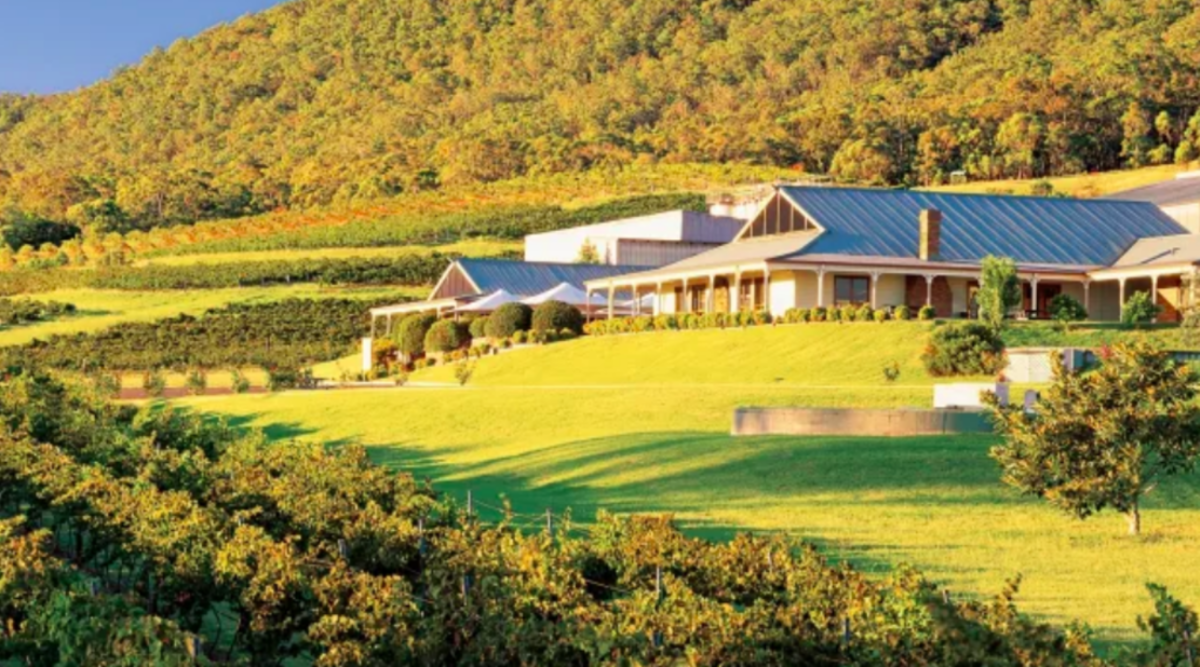Mcwilliam's Vineyards And Wineries Up For Sale photo