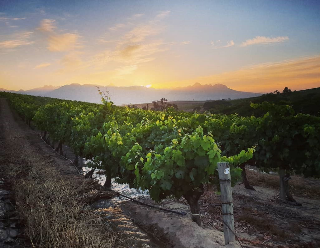 Tim James: Thoughts About The Cape's Leading Wine Areas In The 2020s photo