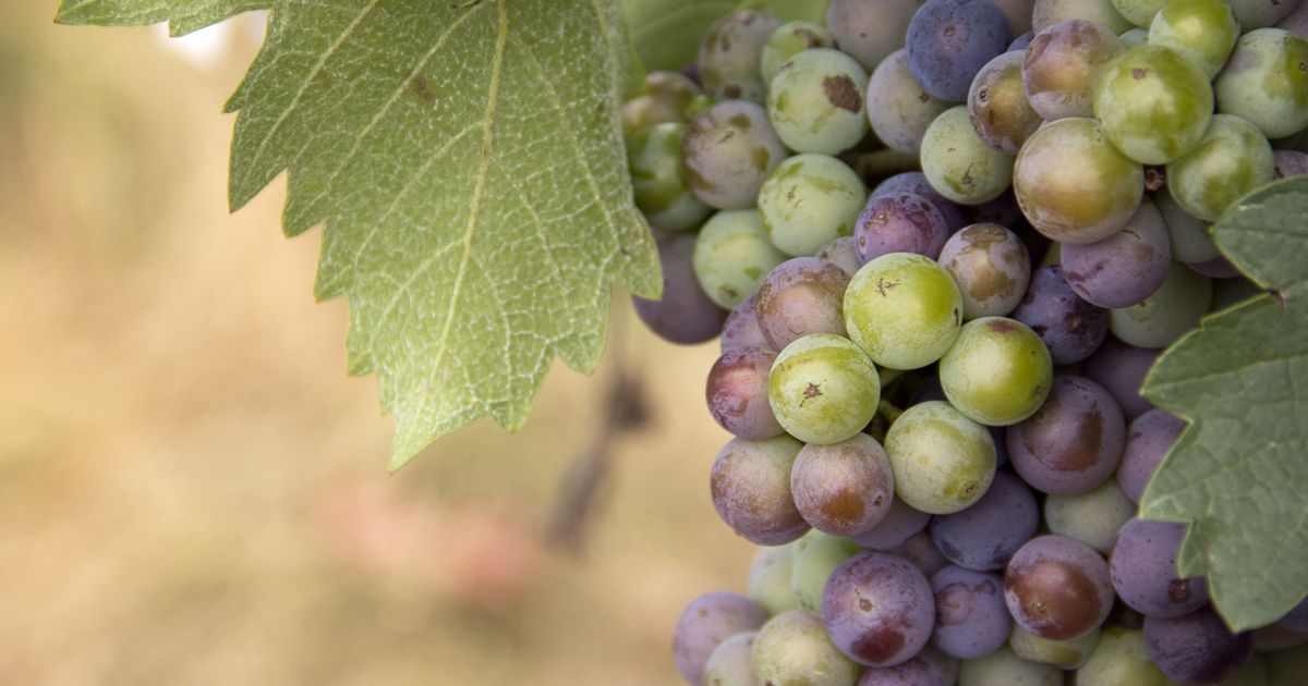 Explore An Up-and-coming Texas Wine Region At Special Dallas Farmers Market Event photo