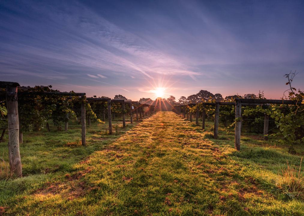 Celebrate Valentine's Day With Bolney Wine Estate photo