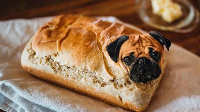 Look: This Instagram Account Photoshops Dog Faces Into Food photo