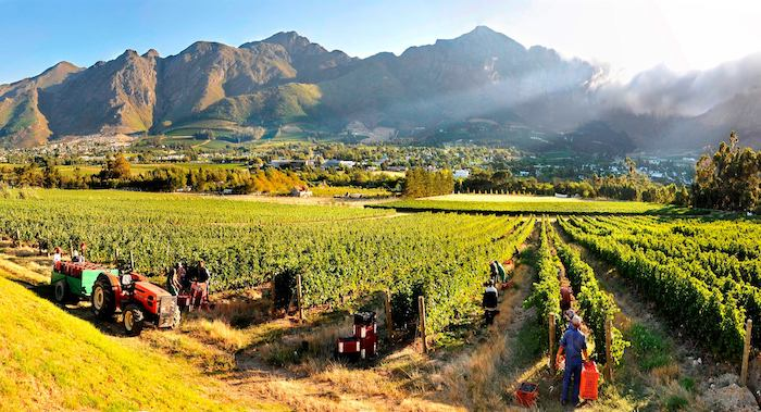 10 Best Wine Routes In The Western Cape photo
