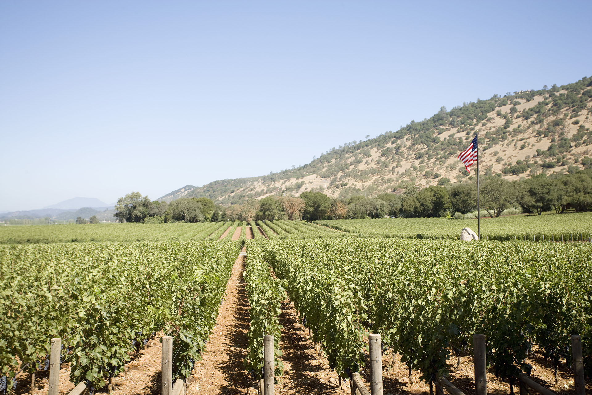 The California Wine Industry Adjusts To The New Not-normal photo