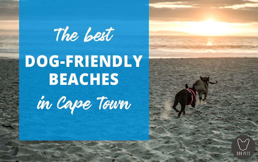 The Best Dog-friendly Beaches In Cape Town photo