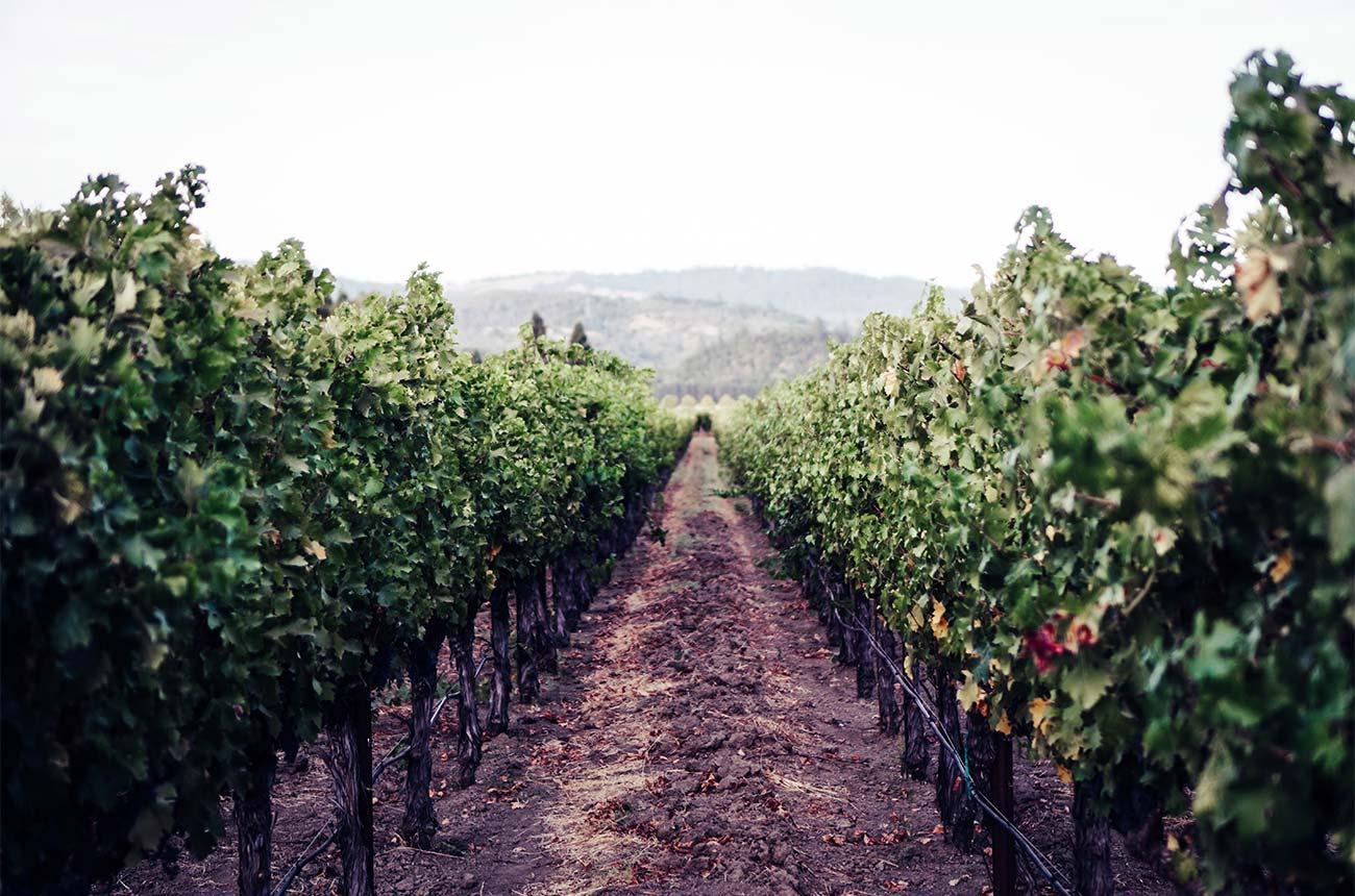 Wineamerica Survey Forecasts Economic Impact Of Covid-19 On Us Wineries photo