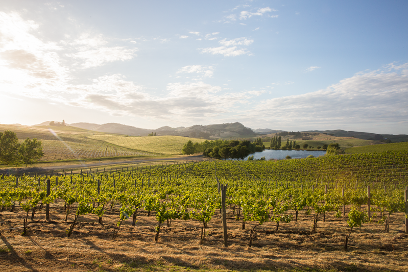 Cuvaison Estate Wines Announces Support For The Restaurant Workers' Community Foundation photo