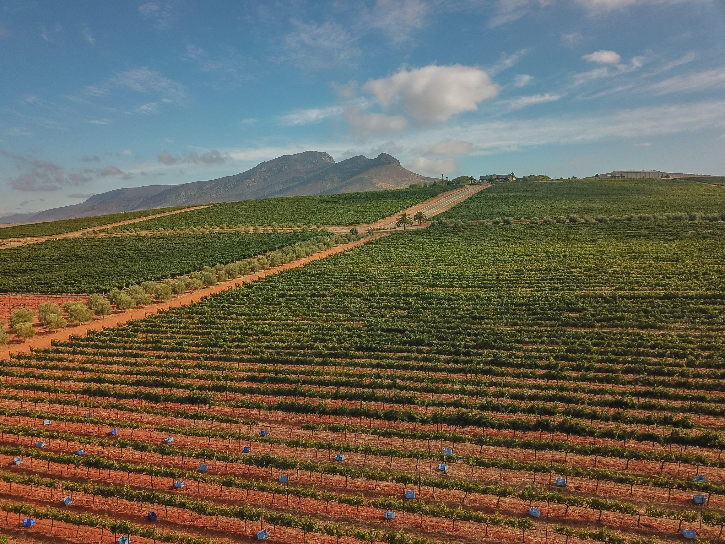 Org de Rac Harvest Expresses Essence of Organically Farmed Grapes photo