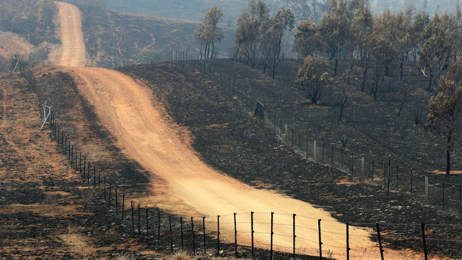 After The Fires, Australian Wineries Assess The Damage photo