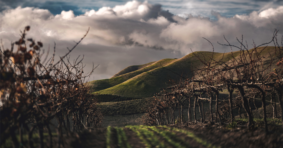 A National Look At How American Wineries Are Weathering The Covid-19 Pandemic photo