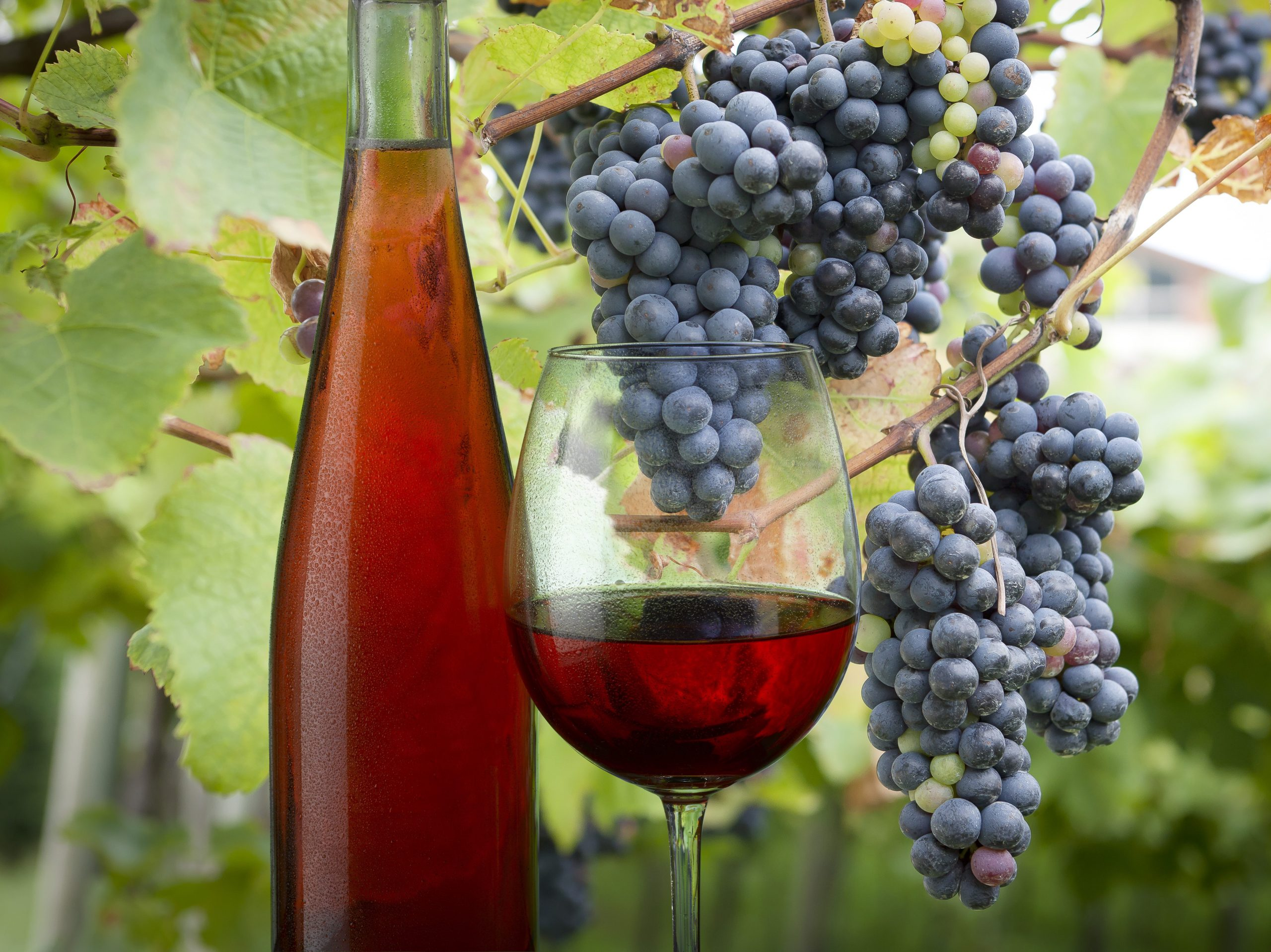 Why Rosé Is A Wine For All Seasons – Tim Atkin – Master Of Wine photo