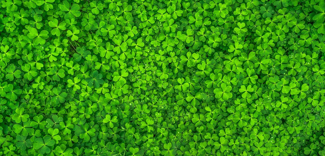 Everything You Need To Know About St Patrick's Day photo