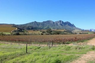 Wine Farms Now Offer Great Deals, With Delivery, Amid Covid-19, And The Harvest Goes On photo