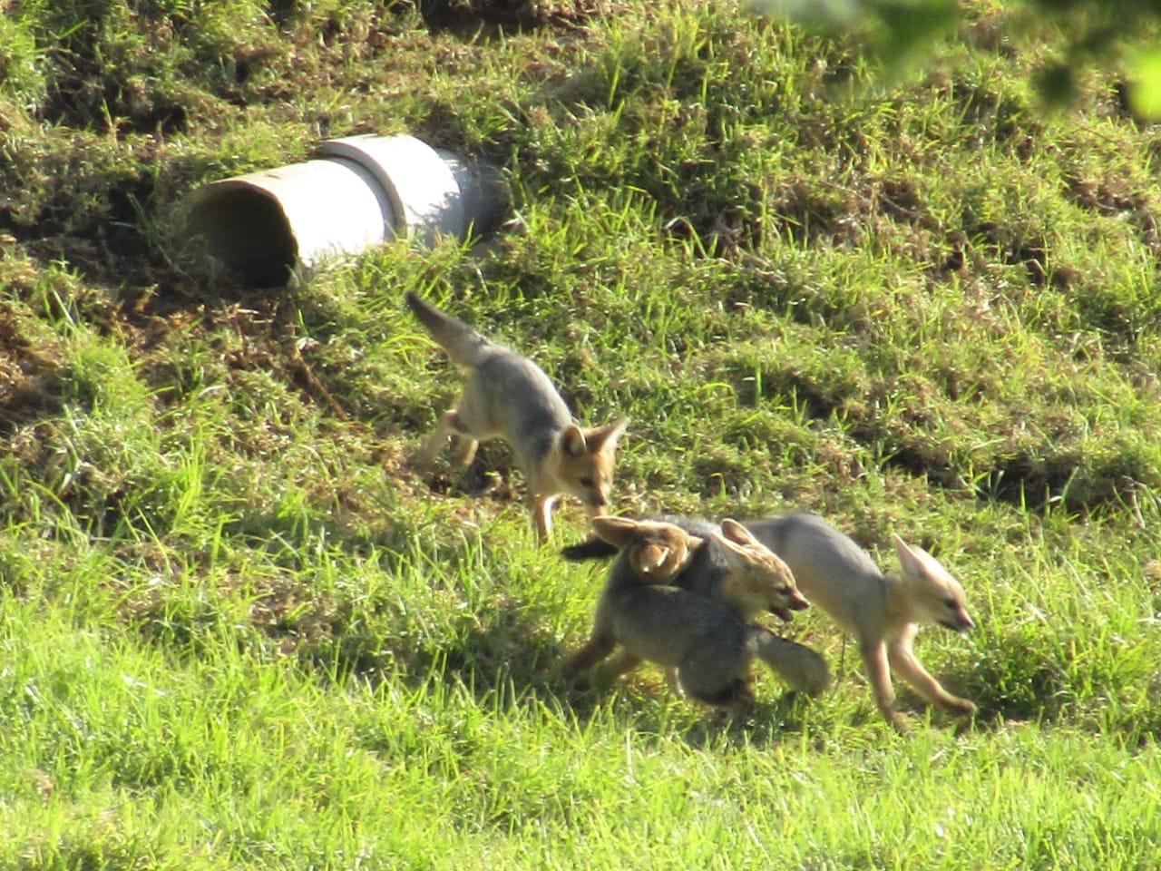 Newborns Thrive In Nature At Vergelegen Wine Estate photo