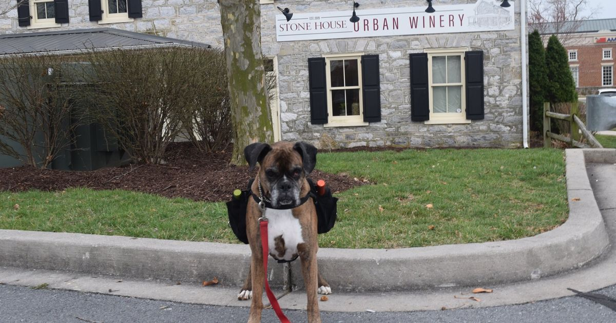 A Very Good Dog Named Soda Pup Is Delivering Wine During The Coronavirus Crisis photo