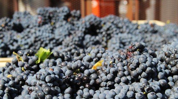 Winemakers Turn To Zoom Tastings To Survive Lockdown photo