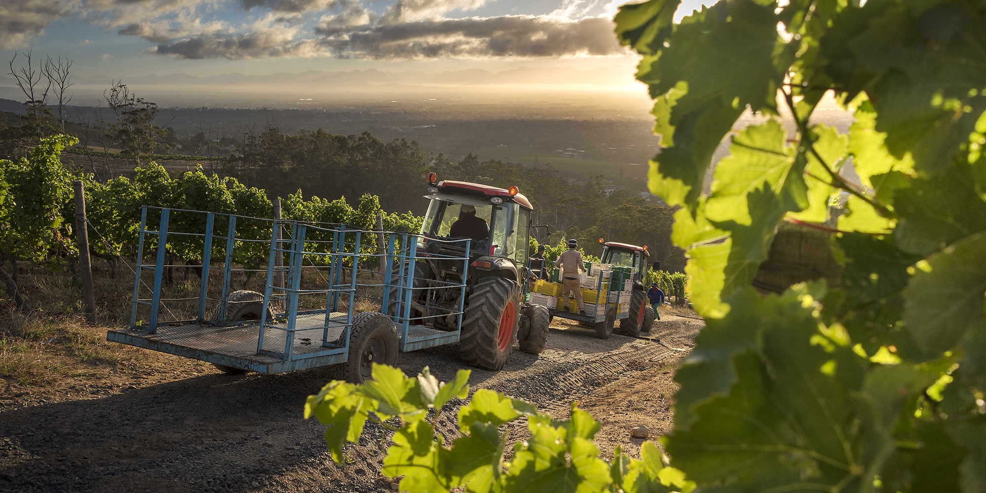 Business Maverick: Sa Wine Producers Lose R200m A Week From Export Ban photo
