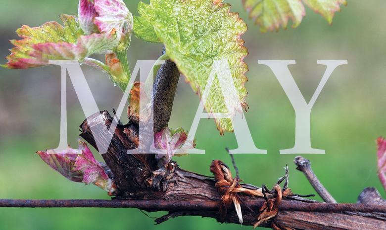 Oregon Wine Month Guide 2020 photo