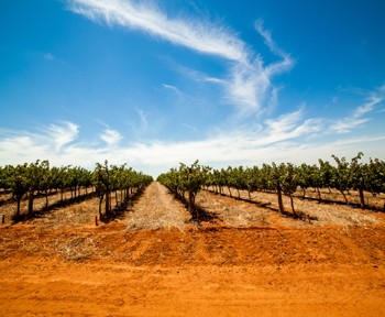Distell To Consolidate Core Wine Brands photo