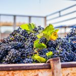 Expect Some Delicious 2020 Wines, Says Nederburg MD photo