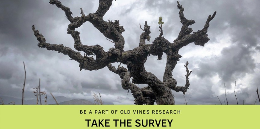 Be Part Of Old Vine Research. Take The Survey photo