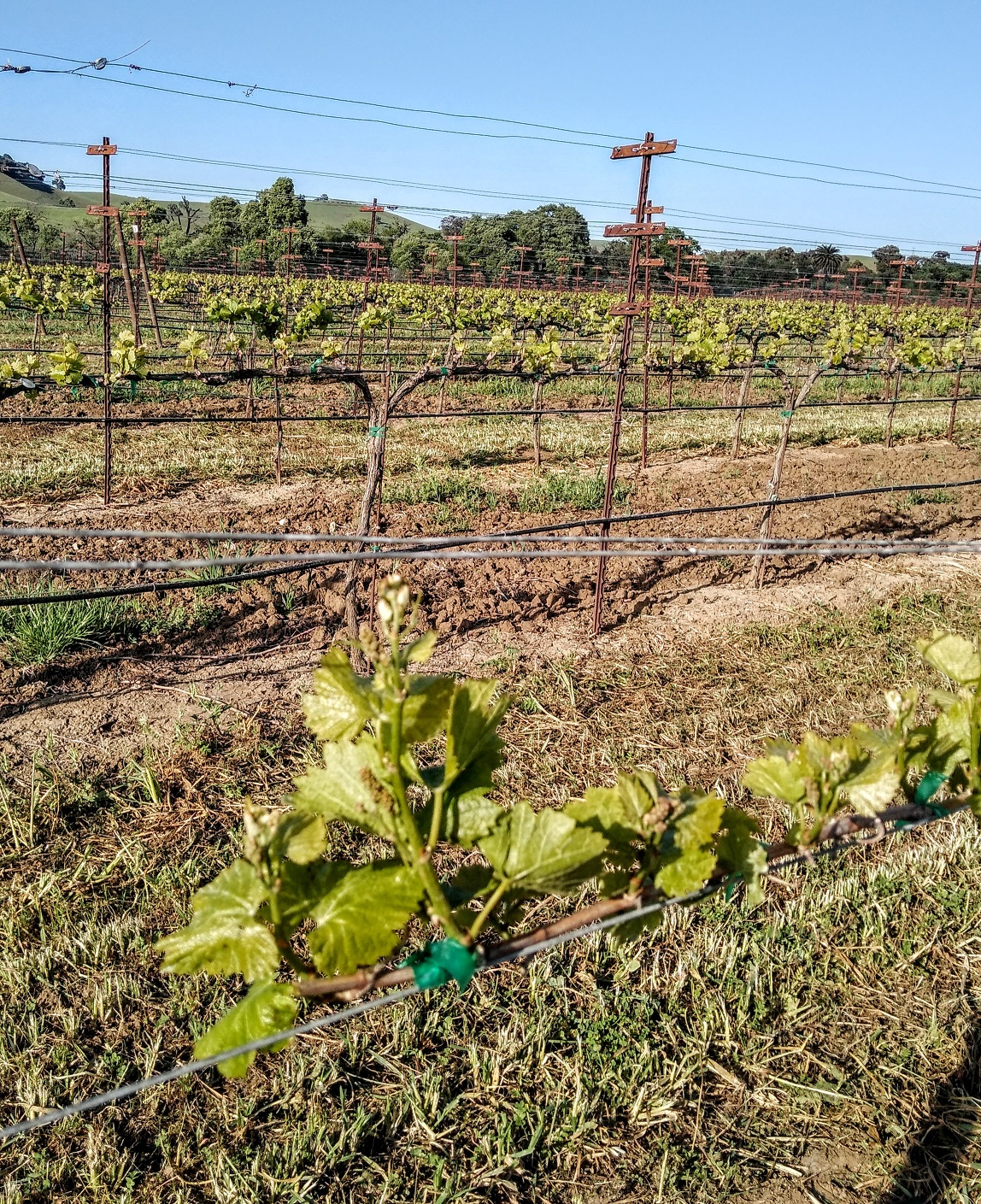California Wineries Cope As Covid-19 Lockdown Affects Business photo